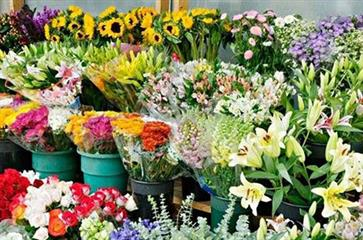 The increase of exports of flower and rose sweat
